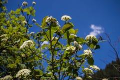 Flores da mola com céu azul atrás imagens de stock royalty free