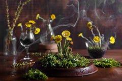 Flores da mola com gotas do musgo e da água imagens de stock