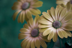 Flores da mola da arte Fotos de Stock