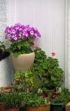 Flores da mola da casa de campo de Kent fotos de stock