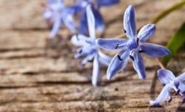 Flores da mola da floresta Fotos de Stock
