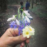 Flores da mola de Beutifull fotografia de stock royalty free