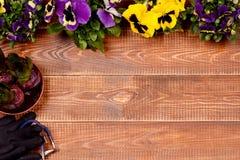 Flores da mola e ferramentas de jardim na tabela de madeira Imagens de Stock Royalty Free