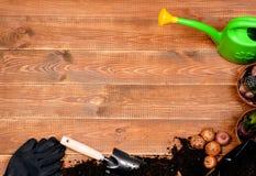 Flores da mola e ferramentas de jardim na tabela de madeira Imagem de Stock Royalty Free