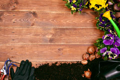 Flores da mola e ferramentas de jardim na tabela de madeira Fotografia de Stock