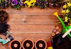 Flores da mola e ferramentas de jardim na tabela de madeira Imagens de Stock