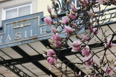 Flores da mola em árvores fotos de stock royalty free
