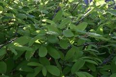 Flores da mola em ?rvores e em plantas imagens de stock royalty free