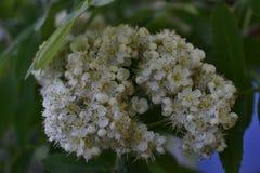 Flores da mola em ?rvores e em plantas fotos de stock royalty free