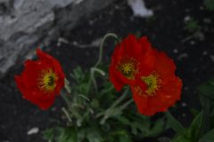 Flores da mola em ?rvores e em plantas imagens de stock