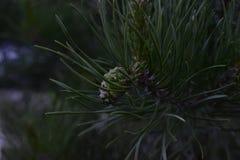Flores da mola em ?rvores e em plantas imagem de stock