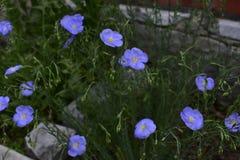 Flores da mola em ?rvores e em plantas fotografia de stock royalty free