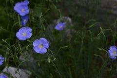 Flores da mola em ?rvores e em plantas fotografia de stock