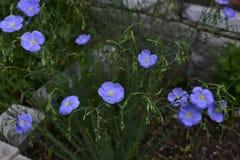 Flores da mola em ?rvores e em plantas imagem de stock royalty free