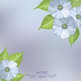 Flores da mola em um fundo cinzento Fotos de Stock Royalty Free