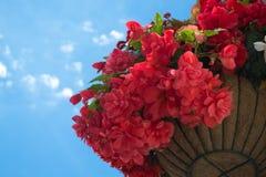 Flores da mola em uma cesta Fotografia de Stock Royalty Free