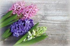 Flores da mola em uma placa de madeira branca Fotos de Stock Royalty Free