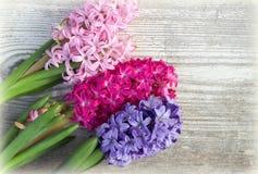 Flores da mola em uma placa de madeira branca Imagens de Stock Royalty Free