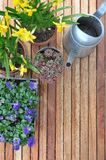 Flores da mola em uns potenciômetros Imagem de Stock Royalty Free