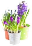 Flores da mola em uns potenciômetros Fotos de Stock Royalty Free