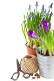 Flores da mola em uns potenciômetros Fotografia de Stock Royalty Free