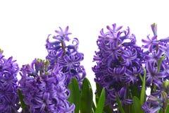 Flores da mola em uns potenciômetros Imagens de Stock Royalty Free