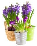 Flores da mola em uns potenciômetros Imagens de Stock