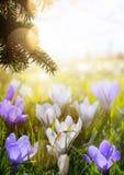 Flores da mola da flor da arte; Dia feliz da Páscoa; Imagem de Stock Royalty Free