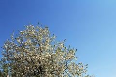 Flores da mola, flores da mola Fotos de Stock