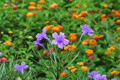 Flores da mola - fundo Foto de Stock