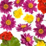 Flores da mola - fundo decorativo Imagem de Stock