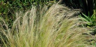Flores da mola - gramas que acenam no vento imagem de stock