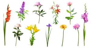Flores da mola isoladas Foto de Stock Royalty Free