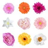 Flores da mola isoladas Foto de Stock