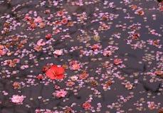 Flores da mola na água Fotografia de Stock