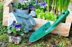 Flores da mola na bandeja de madeira Fotos de Stock