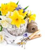 Flores da mola na cesta com ferramentas de jardim Fotografia de Stock Royalty Free