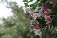 Flores da mola na chuva fotos de stock
