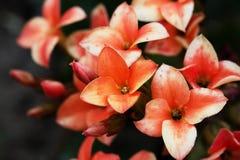 Flores da mola na flor no jardim A mola floresce o fundo Imagens de Stock