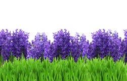 Flores da mola na grama Fotos de Stock