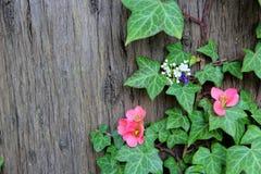 Flores da mola na hera da árvore Imagem de Stock