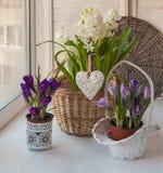 Flores da mola na janela Fotografia de Stock Royalty Free