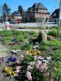 Flores da mola na rua em Europa fotos de stock royalty free