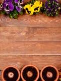 Flores da mola na tabela de madeira Fotos de Stock Royalty Free