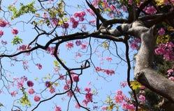 Flores da mola no céu fotografia de stock royalty free