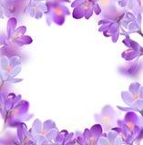 Flores da mola no fundo branco Imagens de Stock