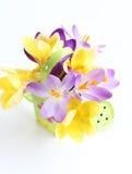 Flores da mola no fundo branco Imagens de Stock Royalty Free