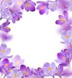Flores da mola no fundo branco Imagem de Stock
