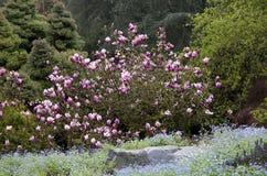 Flores da mola no jardim Fotografia de Stock