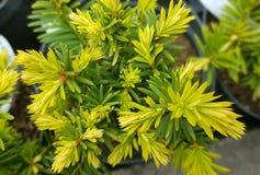 Flores da mola no jardim botânico Imagens de Stock Royalty Free